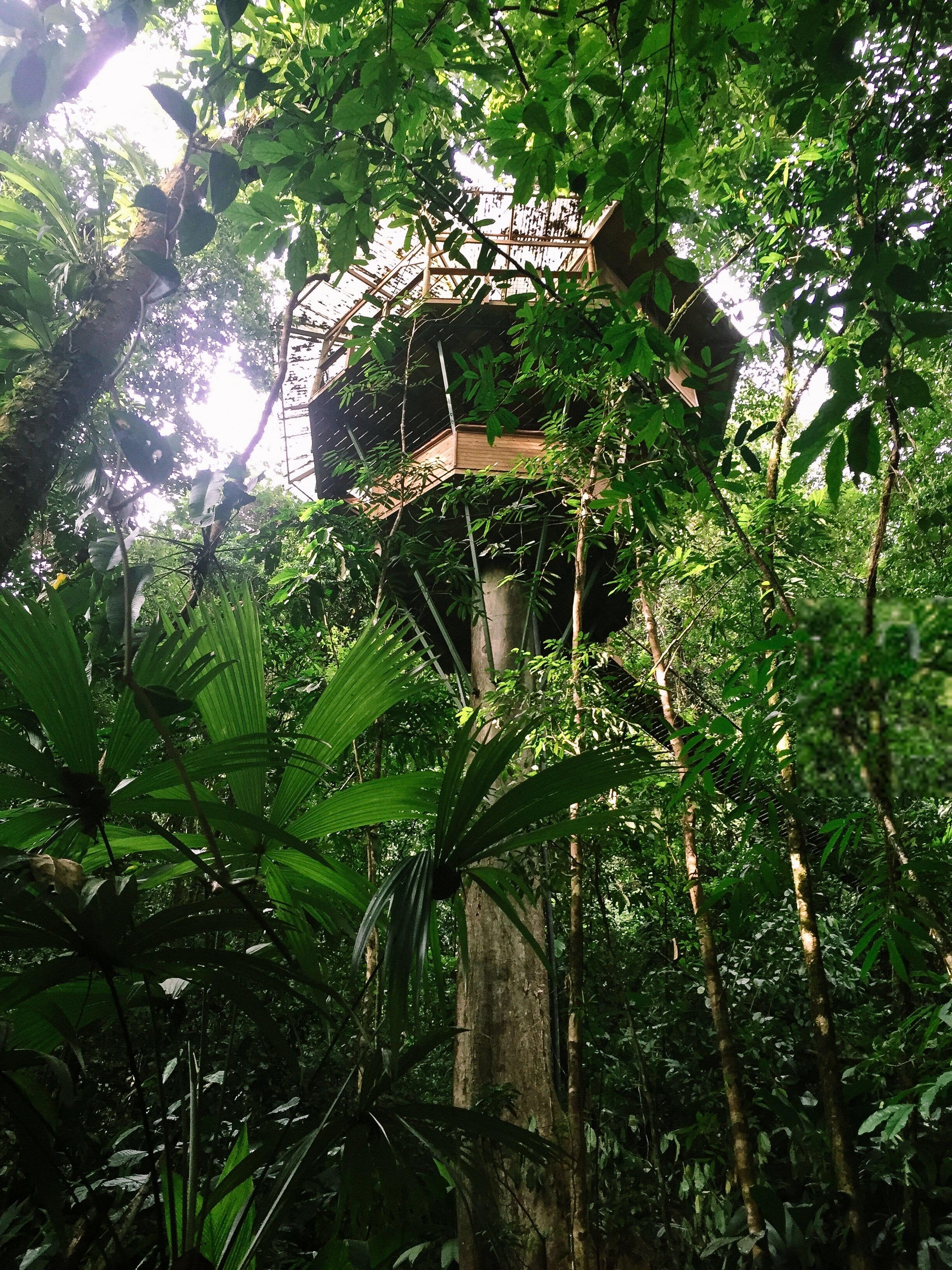 90 Ft High Treehouse Utopia Travel Blog Cirqueling The